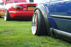 Staggered Fall Edition 2013