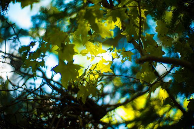 Moth eaten Leaves