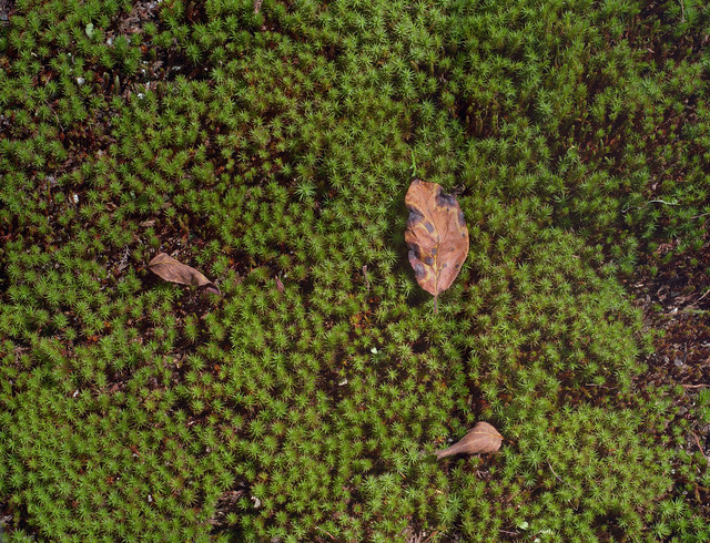 The 300 million pixels images of Moss and dead leaf