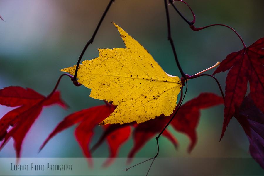 IMAGE: http://farm4.staticflickr.com/3710/10737320564_978ba8360c_b.jpg