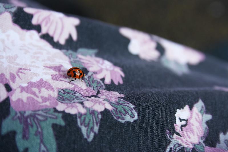 Hello ladybug!