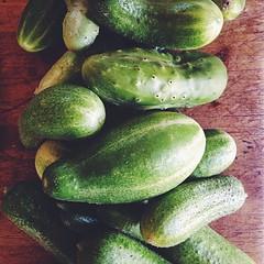 More of the same garden goodness.... Parisian Pickling cucumbers aka cornichons
