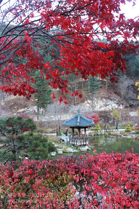 162韓國京畿道晨靜樹木園