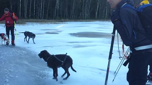 cbiong posted a video:En av hundene plumpet ut i vannet på skøytetur 1.12.2013.