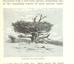 """British Library digitised image from page 223 of """"The Mountains of California [Illustrated.]"""""""