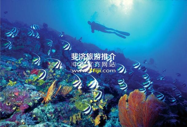 斐济威斯汀水疗度假酒店水肺潜水