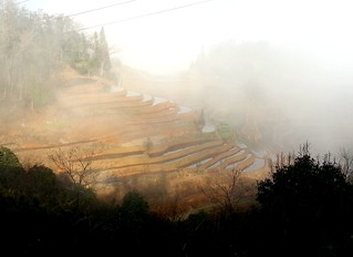 foggy morning 20140116_094016