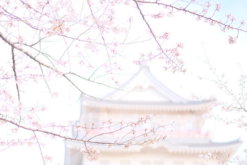 Chiba Castle and cherry blossoms