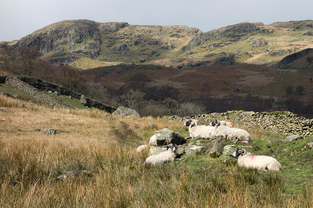 Kentmere sheep rocks