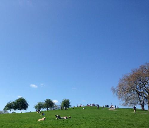 primrose-hill