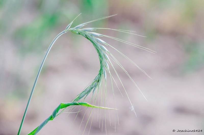 La espiral de la vida -