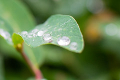 Droplet of Water