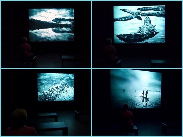 Exposicion-Genesis-Sebastiao-Salgado-CaixaForum-Zaragoza-Audiovisual-Video