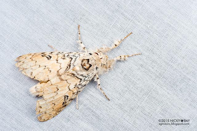 Moth - DSC_4685