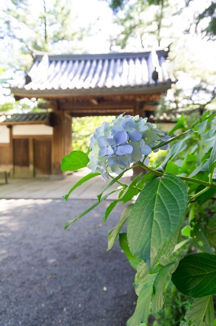 横浜 三渓園 重要文化財建造物全10棟一挙公開
