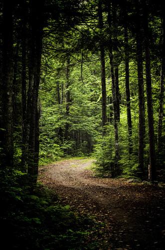 trees light forest dark woods maine doverfoxcroft piscatiquiscounty peakskellystatepark