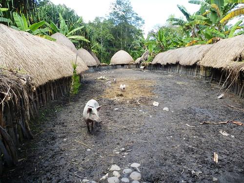 Papua13-Wamena Nord-Wosilimo (81)