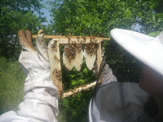 Comb started for the moon hive