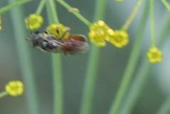 pollinator 020