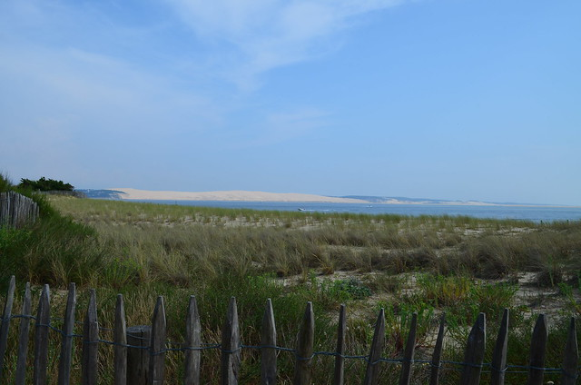 france_bayofarcachon_atlantic_grass_dune