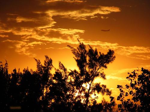 sunset sky silhouette méxico clouds plane airplane mexico atardecer mexicocity df aircraft cielo nubes silueta avión avion ciudaddeméxico booxmiis