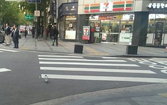 Why did the pigeon cross the road?