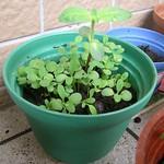 利用空地種植物,圖片來源GreenInside