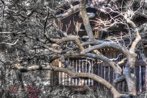 california trees monochrome raw saratoga earthy fav30 hdr hakonegardens 3xp photomatix partialmonochrome nex6 selp1650