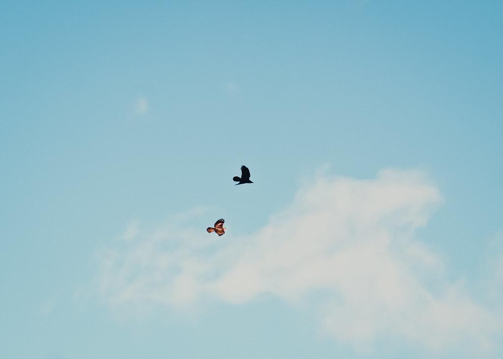 鳥だけど犬猿の仲