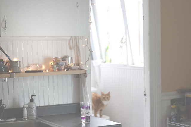 kitchen + kitty in the bathroom