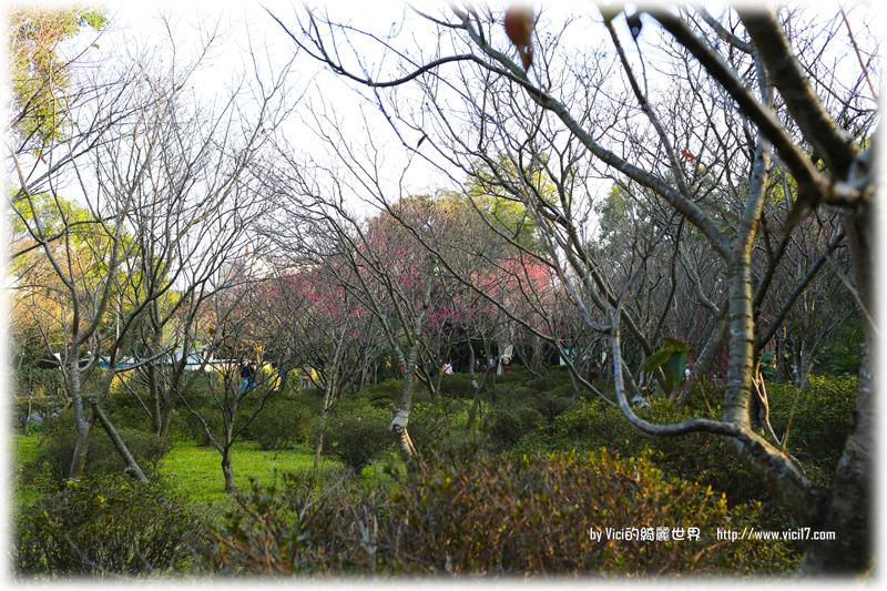 0119陽明山花卉中心071