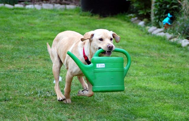 Sam hilft bei der Gartenarbeit, oder: Wir haben jetzt eine eigene Feuerwehr!!
