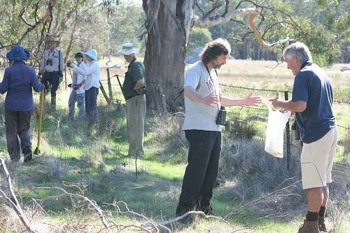 Grid line for olive removal
