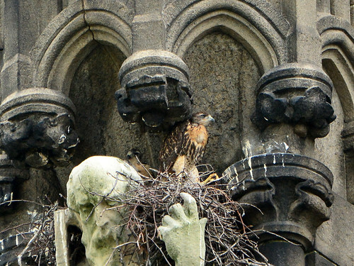 Cathedral Hawk Nest (0881)