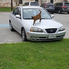 #churchcat #foresthillpresybtianchurch was coming out from church today and our church cat Pumpkin was on my car