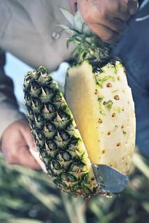 L'ananas du Costa Rica de la gamme Origine par Transgourmet