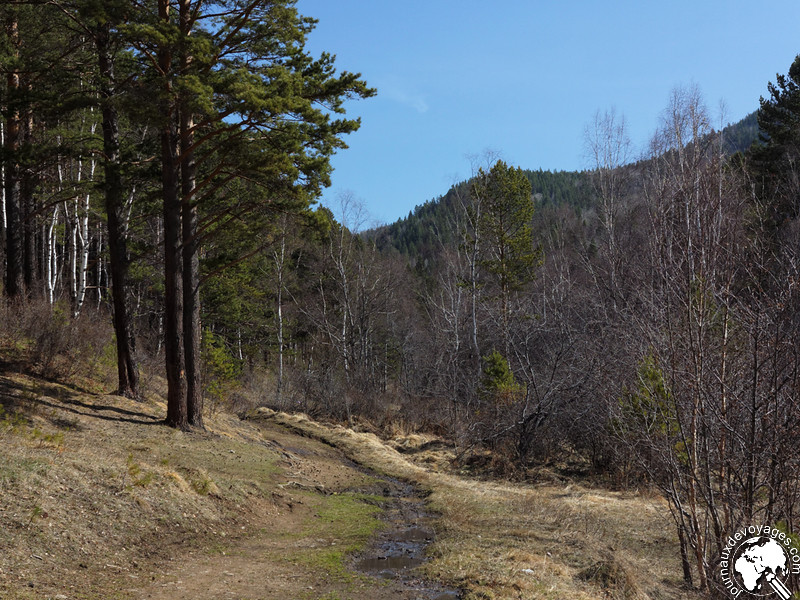 Dans la forêt de Sibérie !