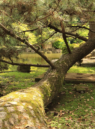 横に生えた木