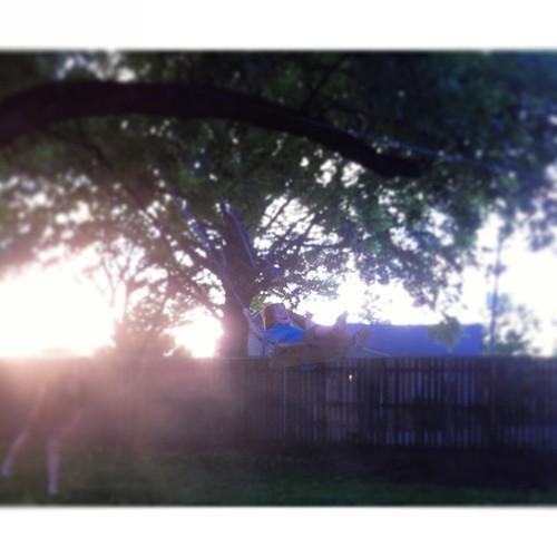 The backyard swing