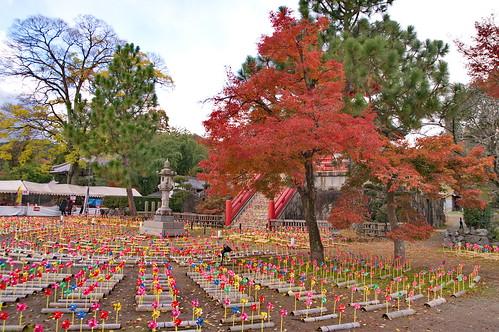 【写真】紅葉 : 大覚寺