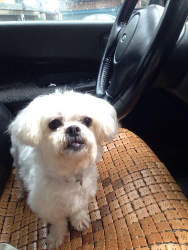 台湾动物紧急救援小组|台湾伤残动物救援|流浪动物送养|动物保护意识