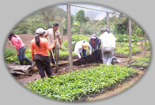 Uni n temporal consac yacuanquer trabajando en los for Viveros zaragoza