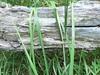 avvolto dall'erba