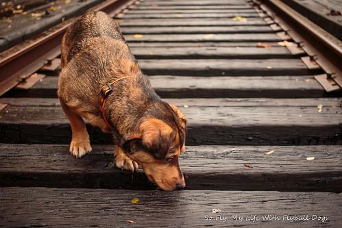 Train Tracks-9533