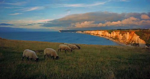 light sea cliff france evening abend coast licht frankreich meer sheep normandie nordsee normandy channel steilküste stimmung küste schafe schaf yport 2013 ärmelkanal dorenawm nex7