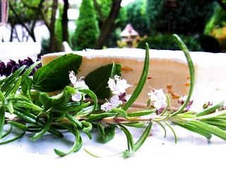 Camembert in the garden