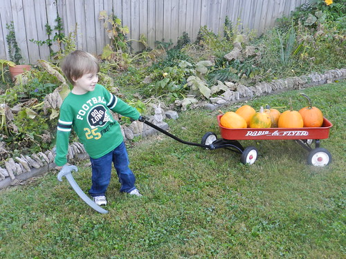 Picking Pumpkins 2013
