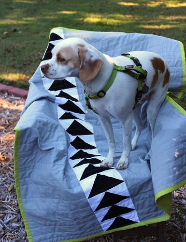 shark quilt & Bobbin