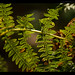 fern in the forest by Phillip Reeve