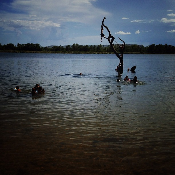 The Swim Beach Tree - Ord River Another one from the Ord River...